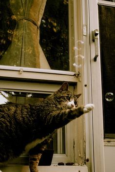 Kitty in the Window ❤️ Baby Animals, Cute Animals, Animals And Pets, I Love Cats, Cool Cats, Cat Window, Cat Watch, Cat Coloring Page, Beautiful Cats