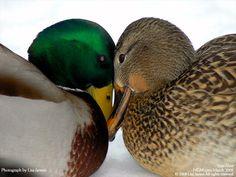 "I wish we had lips so we could ""kiss and make up""!!"