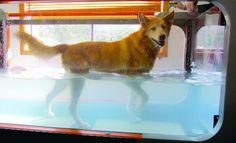 Integrating Treadmills into the Veterinary Practice