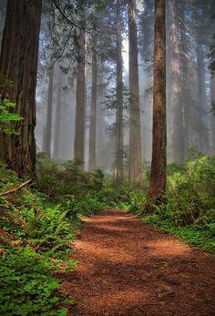 ✮ Path Thru the Redwoods