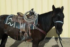 Midnight is a Navajo pony, She is fun to ride and very light. More like a small horse than a pony, She is a great backyard or lesson horse. Horse Tips, Navajo, Westerns, Jr, Ranch, Pony, Coral, Backyard, Branding