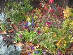 Gardens aren't just for spring and summer. Did you know that numerous plants bloom throughout fall as well? Fall flower gardens provide additional color and interest. Learn more in this article.