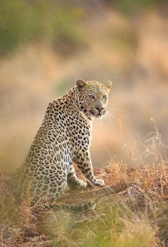 Our photography volunteers captures a great shot in a private game reserve South Africa