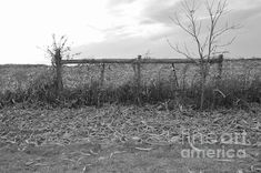 Country Backyards, Nature Scenes, Historical Sites, How To Be Outgoing, Black And White Photography, Color Show, Colorful Backgrounds, Fine Art America, Fence