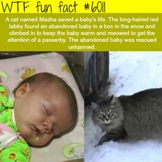 This cat saved an abandon baby in the snow - WTF fun facts