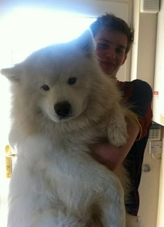 I want a great Pyrenees soooo badly! Sickest dog ever! Its like a tamed polar bear! =): Uh folks not a great Pyrenees sorry this is a Samoyed still a beautiful dog Huge Dogs, I Love Dogs, Giant Dogs, Cute Big Dogs, Big Fluffy Dogs, Giant Fluffy Dog, Weird Dogs, White Fluffy Dog, Baby Animals