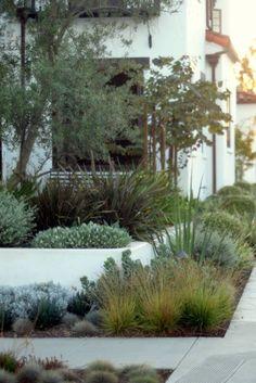 Landscape Garden Design streetside with grasses and succulents Succulent Landscaping, Modern Landscaping, Outdoor Landscaping, Front Yard Landscaping, Landscaping Ideas, Landscaping With Grasses, Landscaping Software, Australian Garden Design, Australian Native Garden