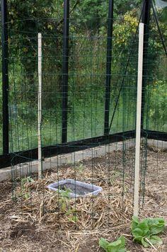 tuto cage à tomate : mise en place finale