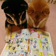 Japanese Dog Breeds, Japanese Dogs, Funny Animal Photos, Dog Pictures, Silly Dogs, Cute Dogs, Dog Backyard, Backyard Landscaping, Backyard Ideas