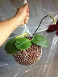 Orchids Garden, Orchid Plants, Air Plants, Indoor Plants, Hanging Orchid, Growing Orchids, Flower Names, Orchid Care, Small Garden Design