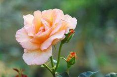 Využite sódu bikarbónu v záhrade! Máme pre vás 13 tipov Holi, Diy And Crafts, Gardening, Flowers, Plants, Paradise, Decor, Gardens, Composters