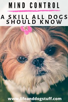 Mind Control - A Skill All Dogs Should Know. #dogs #funnydogs #doghumor