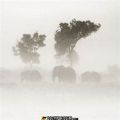 elephant i the mist picture - Yahoo Image Search Results