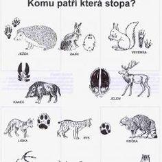 Stopy zvířat /Návody pro tvoření |ProMaminky.cz