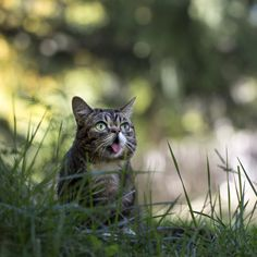bublog:  The mighty BUB in the great outdoors.