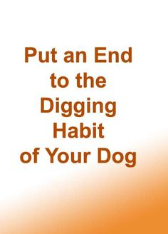 Put an End to the Digging Habit of Your Dog >>> Even if we regard dogs as family members, dogs are dogs and have their unfavorable behaviors. Although many dogs love to dig and it is healthy to allow them to indulge in this activity and express their being dogs, digging holes everywhere in your yard or ruining your flowerbeds is another thing. #dogbehaviortraining #dogobediencetraining #dogcare #petcare #stopdigging