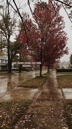 Nyc Fall, New England Fall, Autumn Cozy, Autumn Aesthetic, Fall Pictures, We Fall In Love, Hello Autumn, Autumn Inspiration, Fall Season