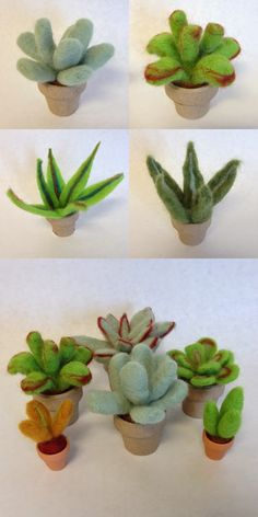 Bird's Eye View Studio: Upcoming: Needle Felted Succulent Class.