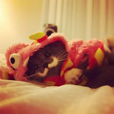 How cute is Hamilton the Hipster cat in his Martha Stewart Pets costume?! #monstercute
