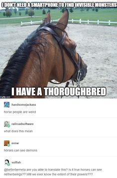 Thoroughbreds- a breed of horse that excels in seeing make believe monsters and other such nonesense