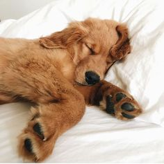 Dogs' sleeping habits can give clues that you can interpret if you know what to look for.