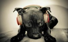 even dogs like good music!