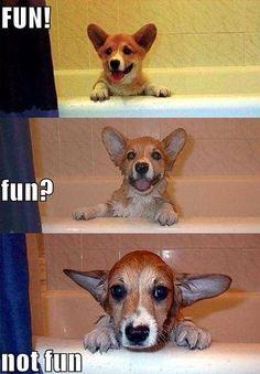 Fun! Fun? Not fun!