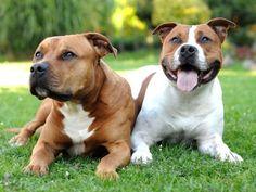 Trauer bei Hunden: Wenn der tierische Partner fehlt – Foto: Shutterstock / Hamik    www.einfachtierisch.de