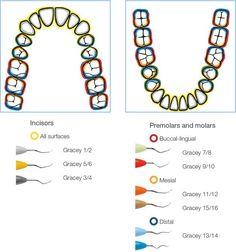 Damaging Dental Care Tips Oral Hygiene Dental Assistant Study, Dental Hygiene Student, Dental Hygienist, Dental Implants, Dental World, Dental Life, Dental Health, Oral Health, Health Care