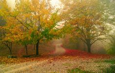 Misty forest by Anna Bogush on 500px