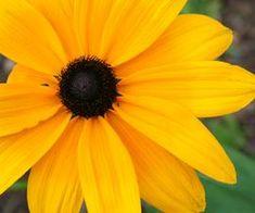 Inexpensive Fall Wedding Flowers | eHow