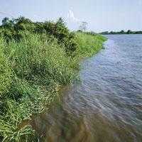 Vegetación hidrófila a orillas del río Magdalena.