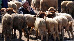 """Malcolm Chapman: """"el mercado Bereber en Azrou, Marruecos. Las ovejas y el pastor esperaban pacientemente a un comprador""""."""