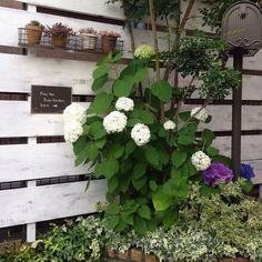 Entrance/ガーデニング/ガーデン/多肉植物/ポスト/紫陽花...などのインテリア実例 - 2016-06-17 12:31:21 | RoomClip (ルームクリップ)