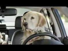 Melhor propaganda engraçada com uma família de cachorros - YouTube