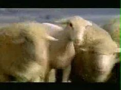 Budweiser Clydesdale Streaker Super Bowl XL Commercial  OMG I have to clean the screen now.