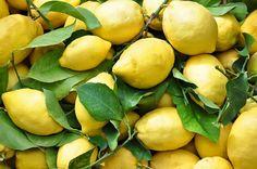 I limoni si rubano come fosse oro.