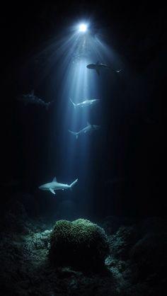 The World Under the Water. Under The Water, Under The Sea, Underwater Photography, Animal Photography, Nature Photography, Wild Animals Photos, Wale, Underwater Life, Underwater Animals