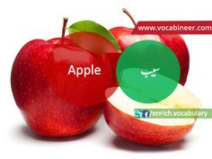 Learn English vocabulary in Urdu. English through Urdu made easy. Easiest way to learn English vocabulary in Urdu. English to Urdu Vocabulary. Gre Vocabulary, English Vocabulary, Fruits Name With Picture, Fruits And Vegetables Names, Fruit Names, English Speaking Practice, Fruit List, English Translation, Learn English