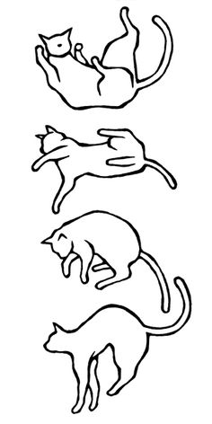 falling cat - Google Search