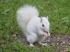 """Looks like our pet """"Squirrley"""" when we lived in Brevard, N. Animals Beautiful, Cute Animals, Beautiful Scenery, Wild Animals, Brevard North Carolina, Creatures, Squirrels, Pets, Waterfalls"""