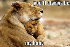 funny animal pictures with captions | trendystyle: Aww Cute Funny Animals captions humor silly hilarious ...