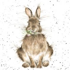 Bunny Rabbit Blank Greeting Card – To Some Bunny Special by Wrendale Designs Watercolor Animals, Watercolor Paintings, Watercolors, Lapin Art, Wrendale Designs, Card Designs, Rabbit Art, Bunny Rabbit, Bunny Art