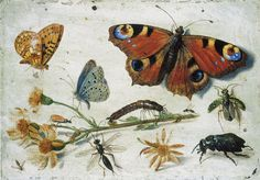 Jan Van Kessel The Elder - Study of insects