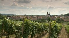 Weinberge zwischen Main und Steigerwald | Bild: BR/ W. Teufl