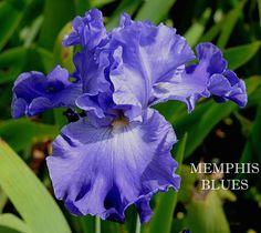 'Memphis Blues', 1987