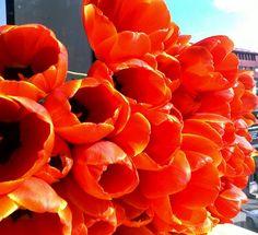 Tulipanes Color Naranja