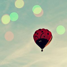 Tuesday Inspiration - Theres no where to go but UP. #inspiration #ladybug #ladyluck