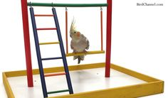 Your pet bird doesn't need to perch on you to bask in your attention — use a playgym.