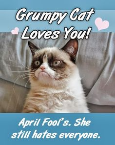 I'm mostly rep inning this because it says grumpy cat is a GIRL. I don't know why but I always thought he was a boy.